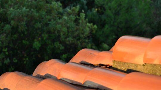 Få en miljøvenlig algebehandling af taget
