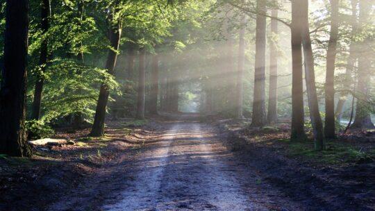 Kom ud i naturen – også som rollator bruger