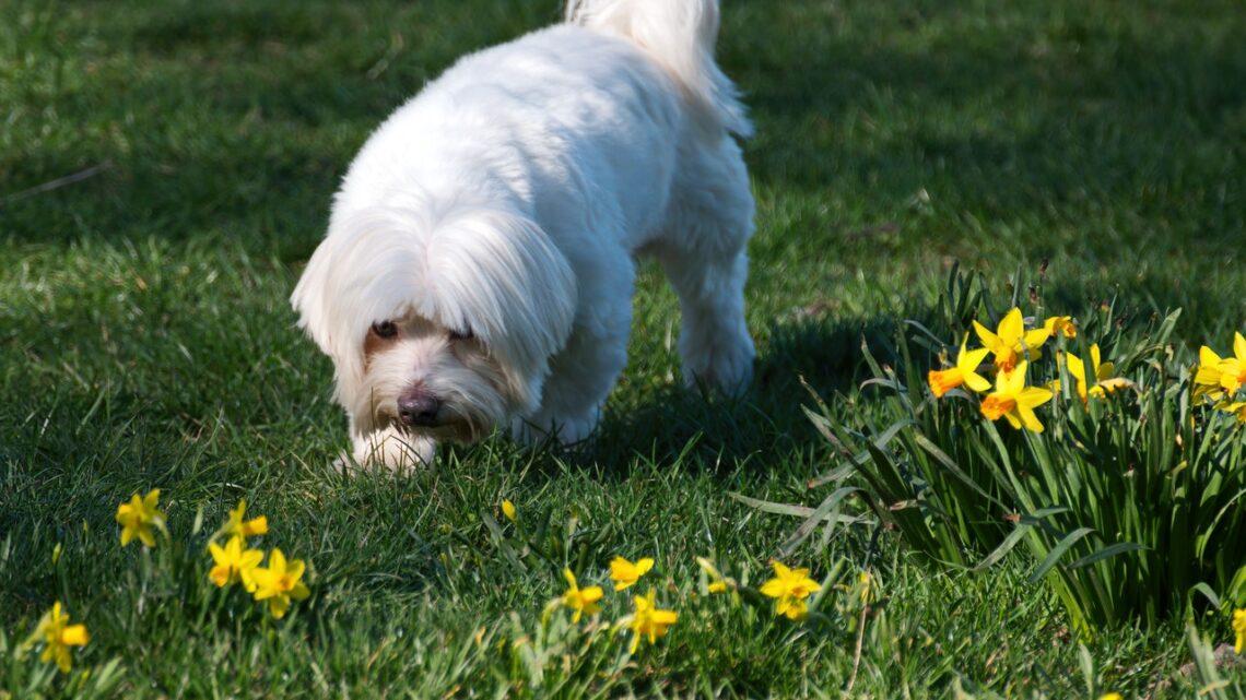 Vælg økologisk og miljøvenligt hundelegetøj og foder