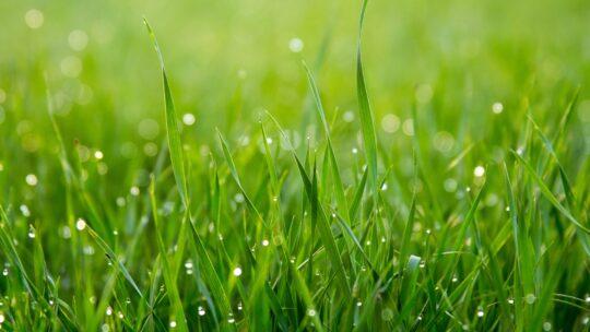 Sådan får du en miljøvenlig græsplæne