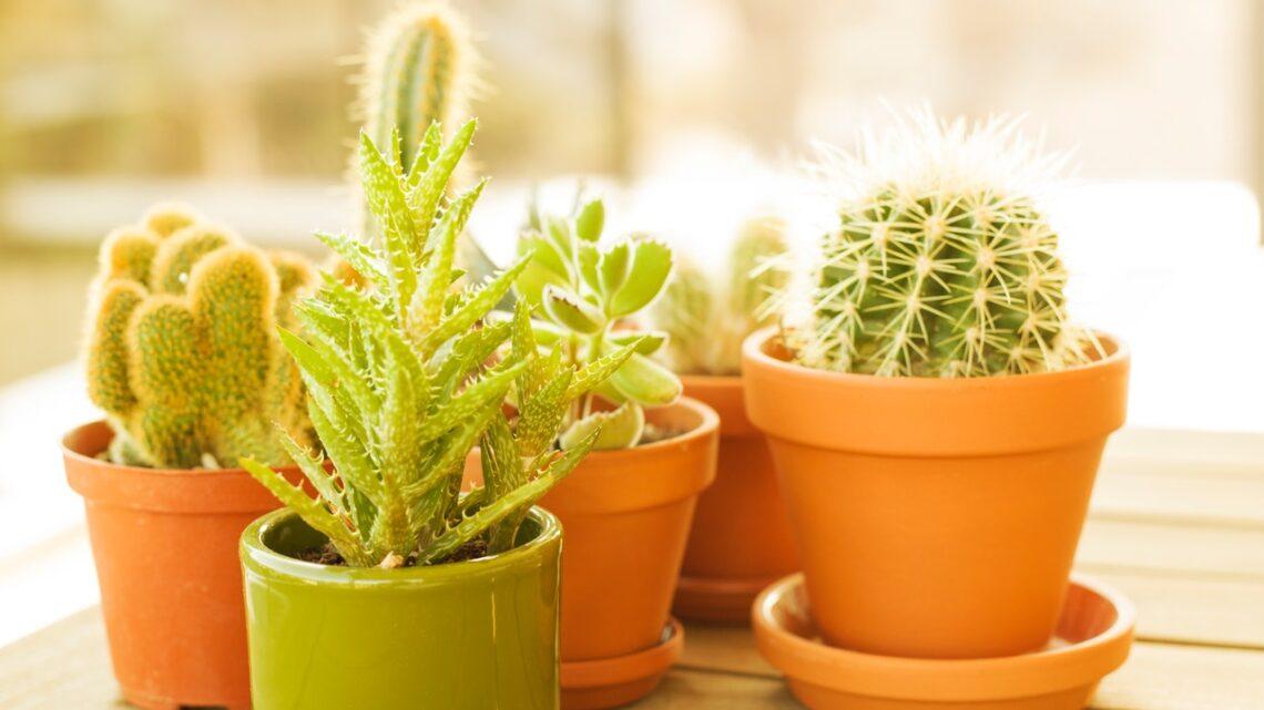 Vælg bæredygtigt når du køber terracotta krukker