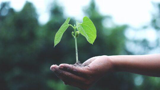 3 måder du kan passe på miljøet